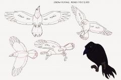crow_flyingposes_101203